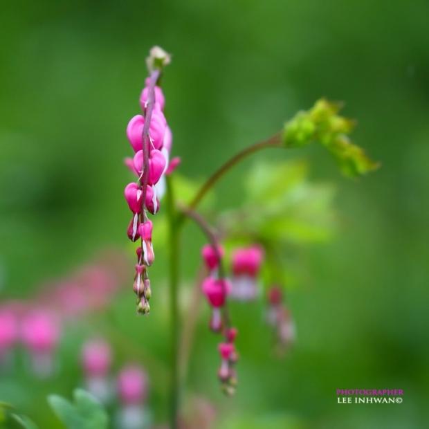 Flower Photography By LEE INHWAN 8