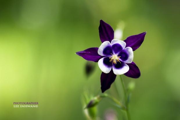 Flower Photography By LEE INHWAN 9