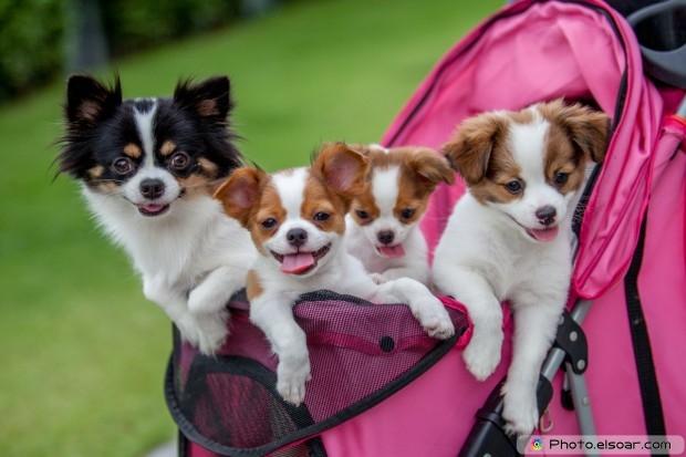 Four Dogs Very Nice