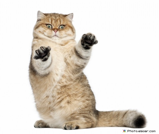 Funny Cat Stands On Two Legs