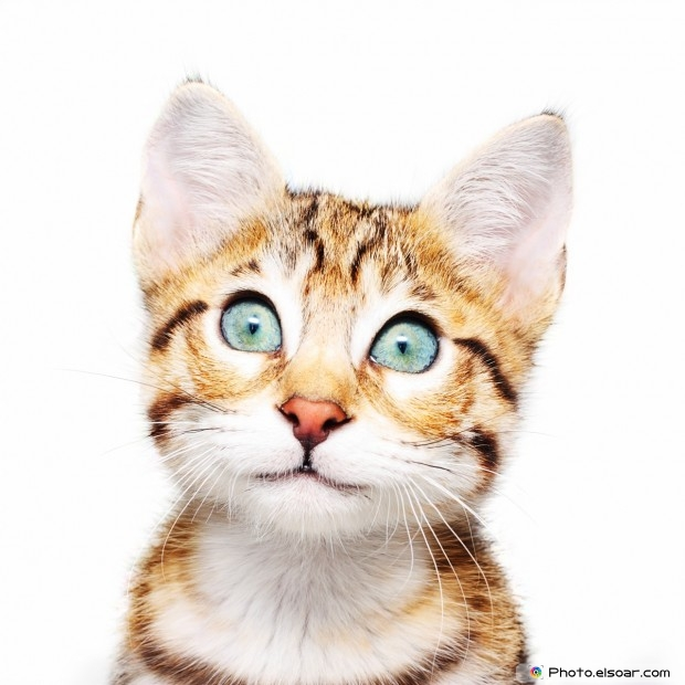 Funny Cats With An Open Eye