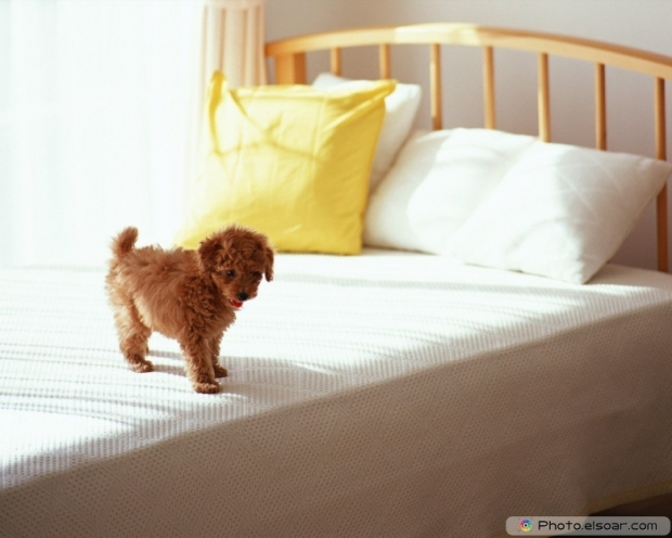 Funny Puppy Picture D