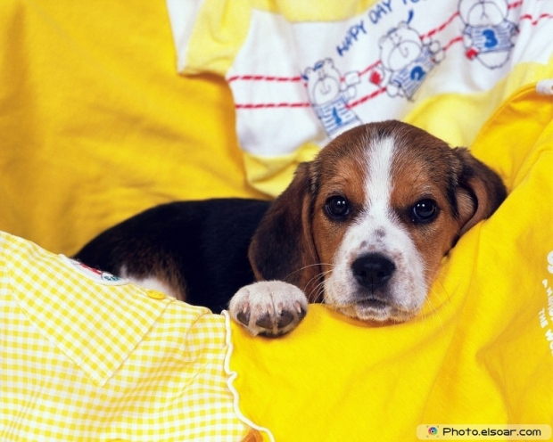 Funny Puppy Picture K