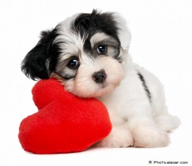 Funny Puppy Picture U