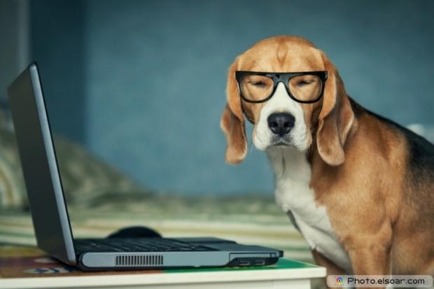 Funny Sleepy Beagle Dog Near Laptop