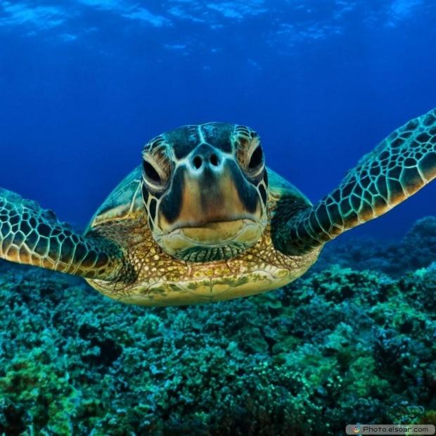 Funny Turtle Underwater
