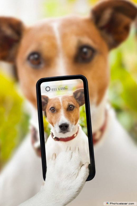 Funny dog taking a selfie with a smartphone