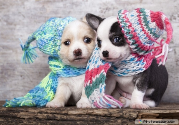 Funny two puppy