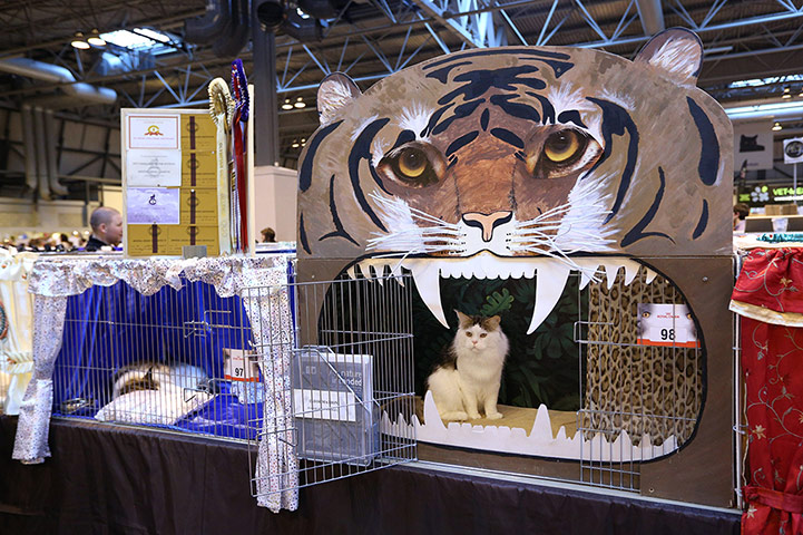 A cat named 'Bostin Buddy' waits in its pen