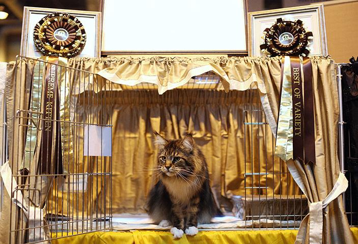 Mr Bojangles waits to be exhibited