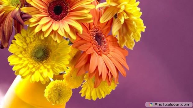 Gerber Daisies Flower Bouquet. Free HD Wallpaper