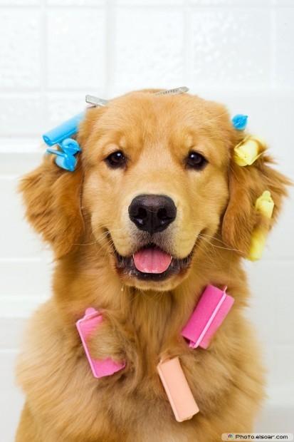 Golden Retriever Dog Sitting In A Bathtub