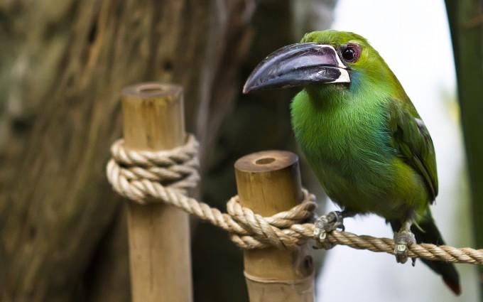Gorgeous Animals - Birds Photos 1