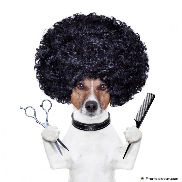 Hairdresser Scissors Comb With Funny Dog