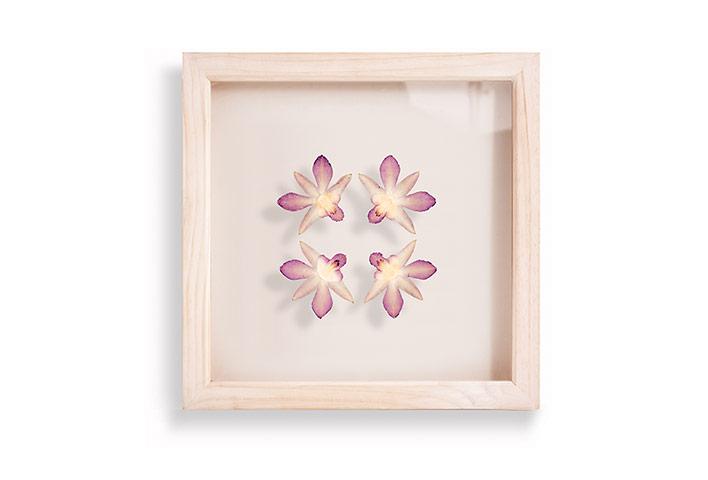 Hannah Brown framed flowers