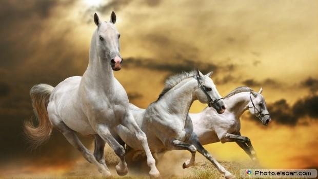 Horses Full HD Wallpaper