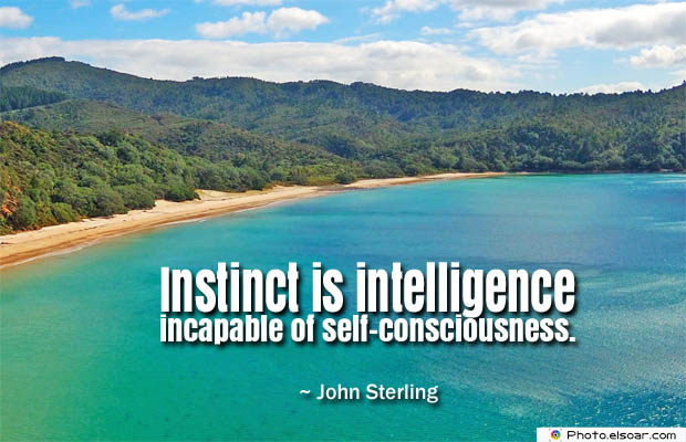 Quotes About Chakras , Instinct is intelligence incapable