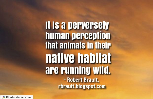 It is a perversely human