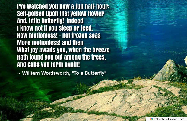 Butterflies Quotes , I've watched you now a full half-hour
