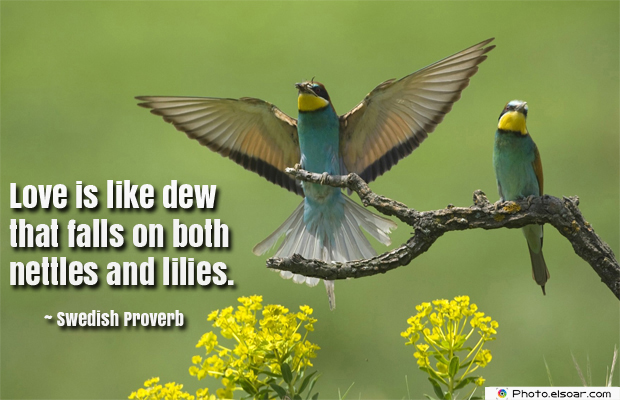 Love is like dew that falls on both nettles
