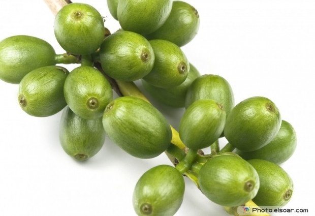 Many of Green coffee