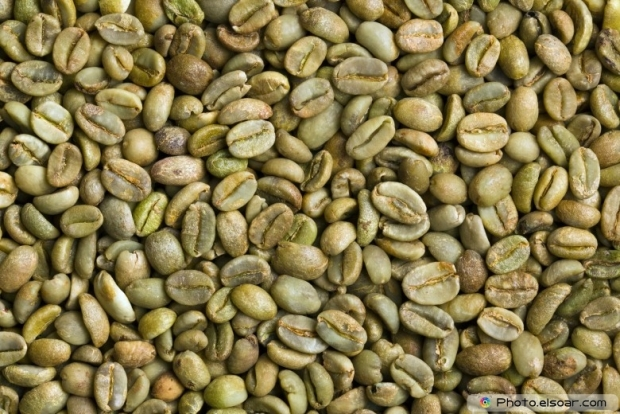 Many of green coffee beans