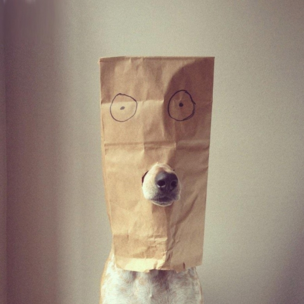 Most Funniest Dogs Pictures 23