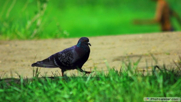 Nice Bird On The Green Grass