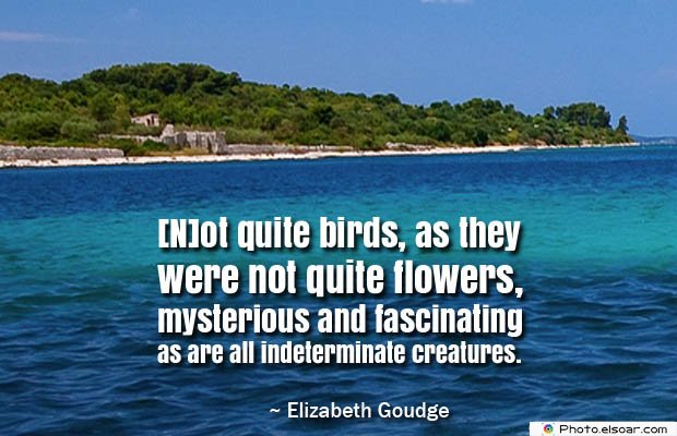Butterflies Quotes , [N]ot quite birds, as they were not quite flowers