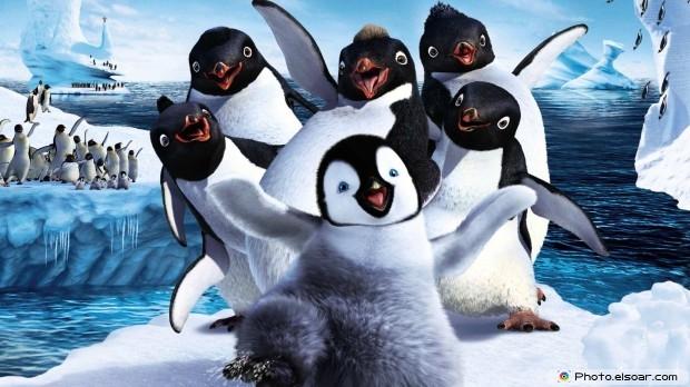 Penguins HD Desktop Wallpaper