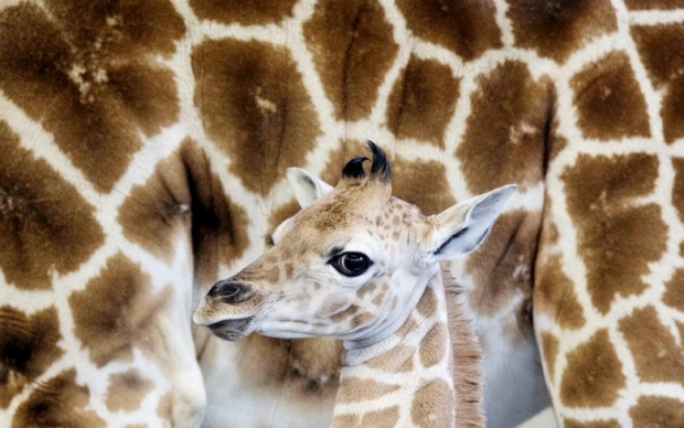 Pictures of Animals in New Photo Gallery 3
