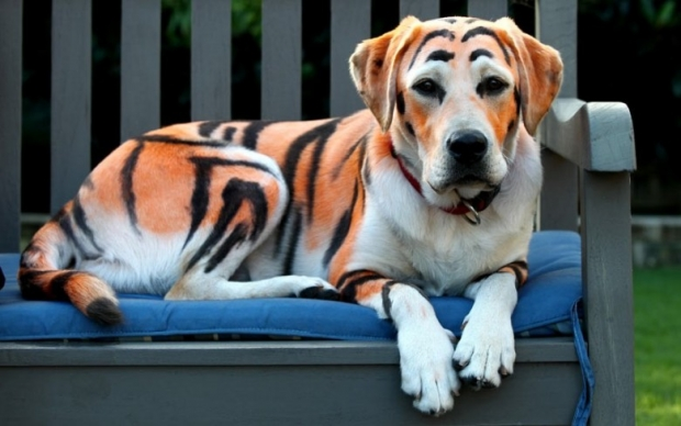 Pictures of Animals in New Photo Gallery 8