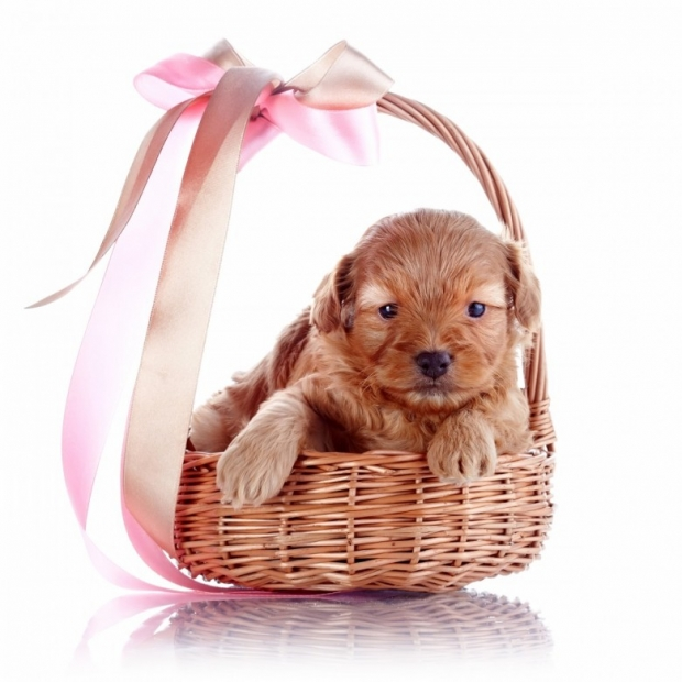 Puppy in a wattled basket with a bow