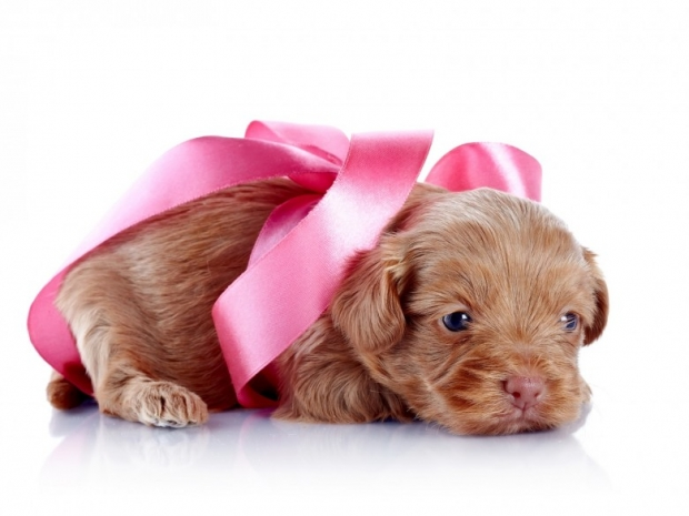 Puppy with a pink bow
