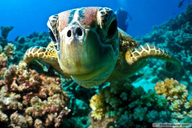 Selfie Camera Very Close From The Face Of The Turtle