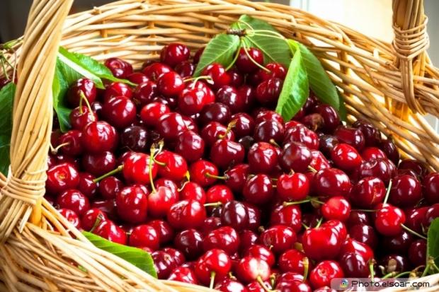 Tasty Fresh Cherries