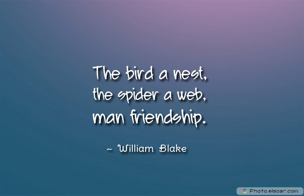 Best Friends Forever , The bird a nest, the spider a web, man frien