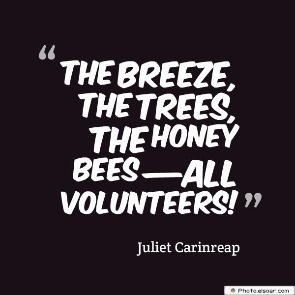 The breeze, the trees, the honey bees