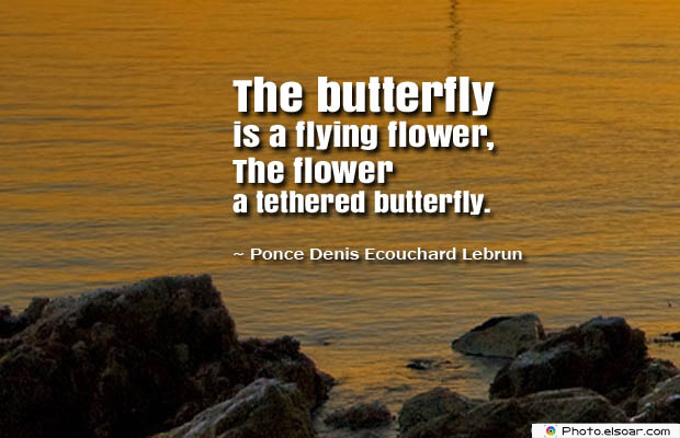 Butterflies Quotes , The butterfly is a flying flower