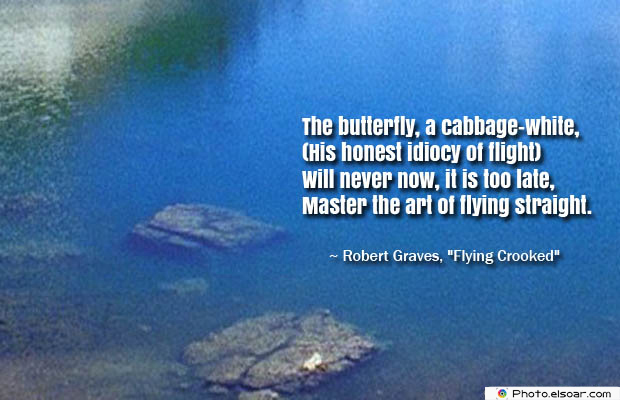 Butterflies Quotes , The butterfly