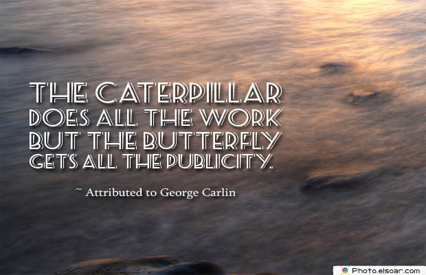 Butterflies Quotes , The caterpillar does all the work