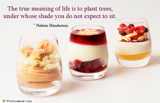 Dare To Be Great , Motivational Quotes, Inspirational Sayings , The true meaning of life is to plant trees