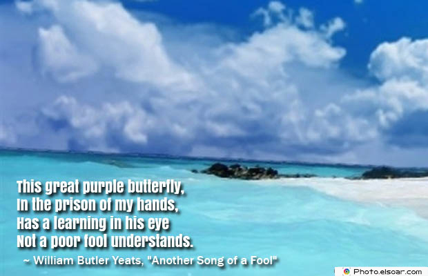 Butterflies Quotes , This great purple butterfly
