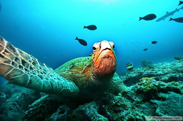 Tortoise Take A Selfie