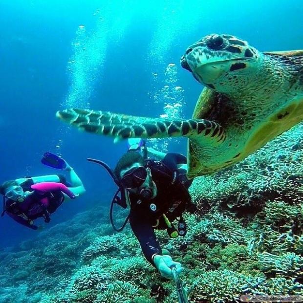 Tortoise With Human Underwater