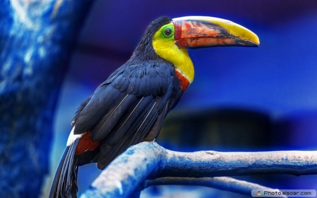 Toucan Over A Tree Branch