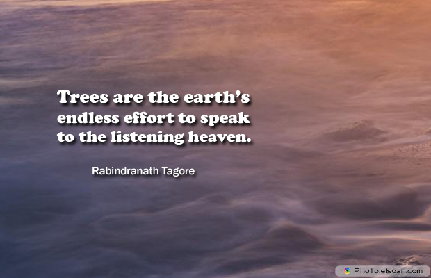 Short Strong Quotes , Trees are the earth's endless effort to