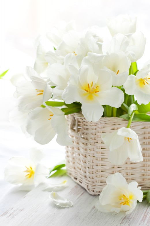 White Lily Flower Images