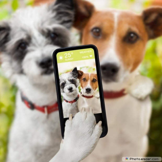 dogs taking a selfie with a smartphone